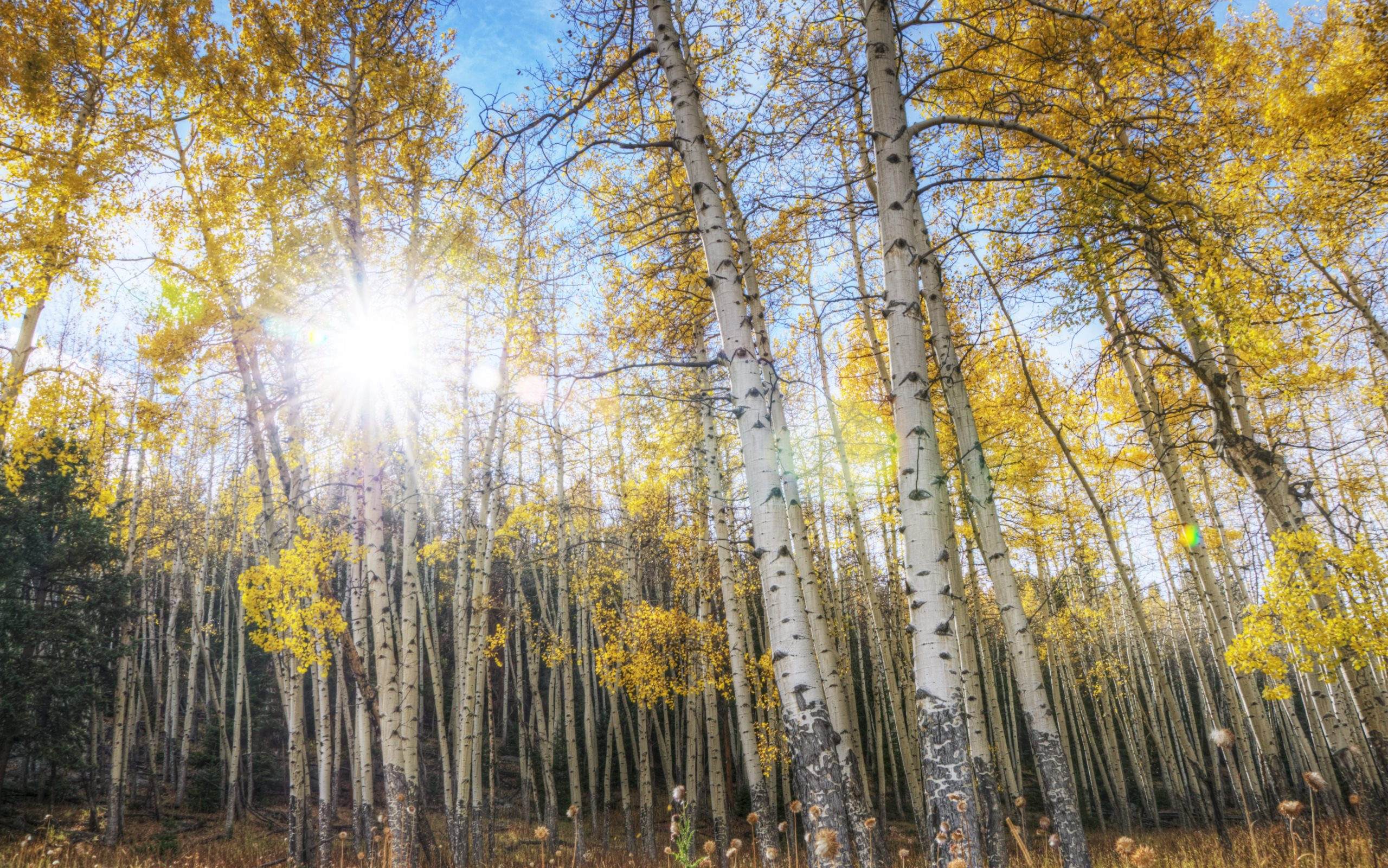 fall aspen 39 s wallpaper bing images