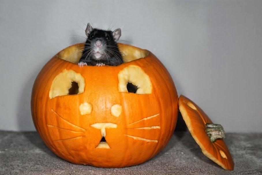 Funny halloween animals 21