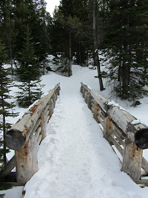Footbridge on the trail to Alberta Falls