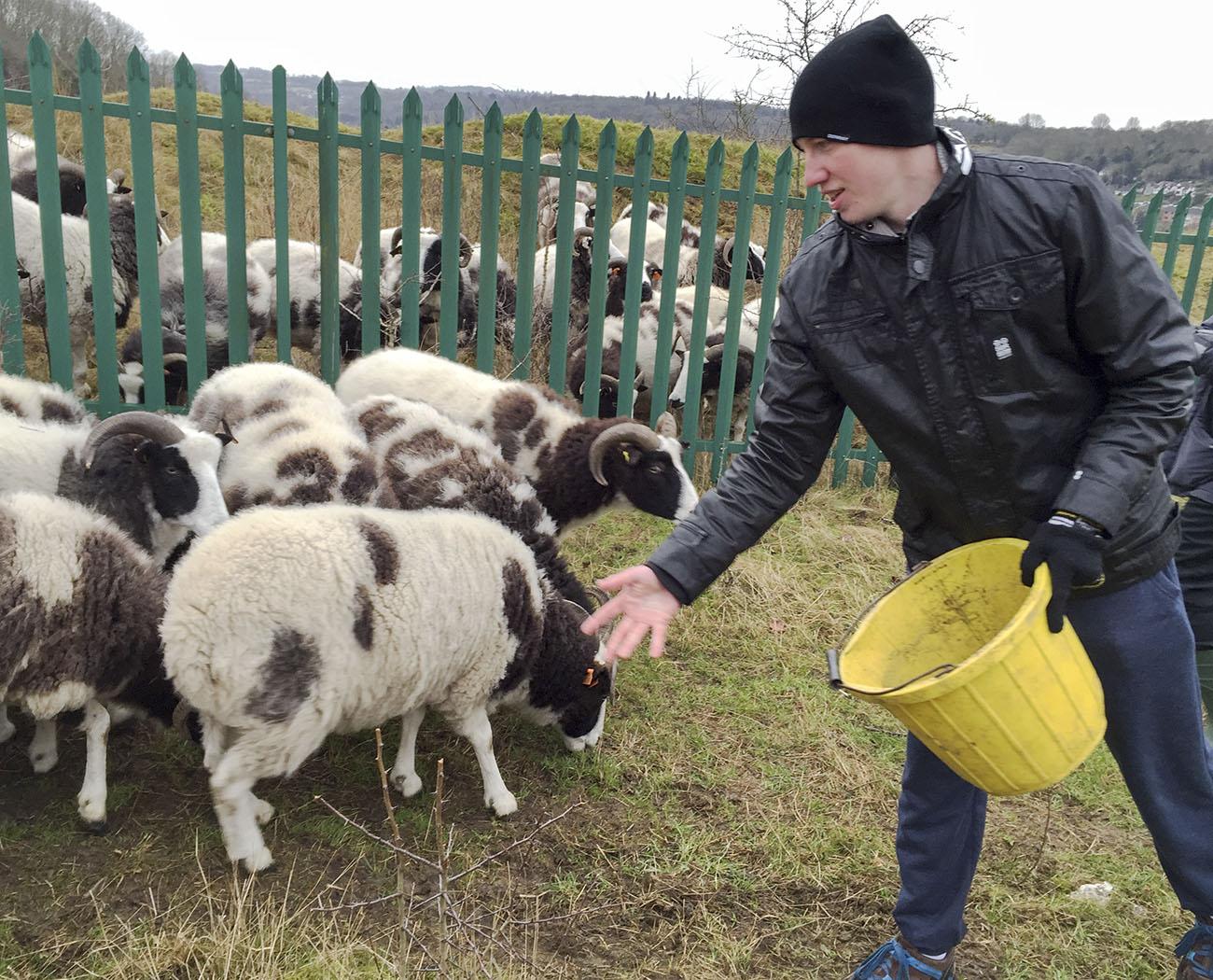 A walker feeding sheep in Riddlesdown quarry.  26 December 2014.