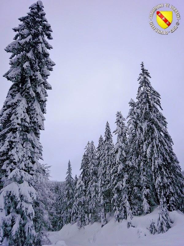 LA BRESSE (88) - Autour du lac de Lispach enneigé !