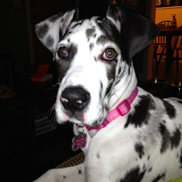 Top 5 Best Lap Dog Breeds