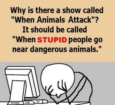funny Show Called When Animals Attack - When Stupid People Go Near Dangerous Animals