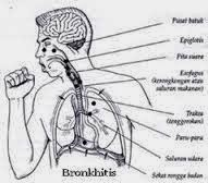 obat  batuk berdahak,obat batuk tradisional,obat batuk herbal,obat batuk kering