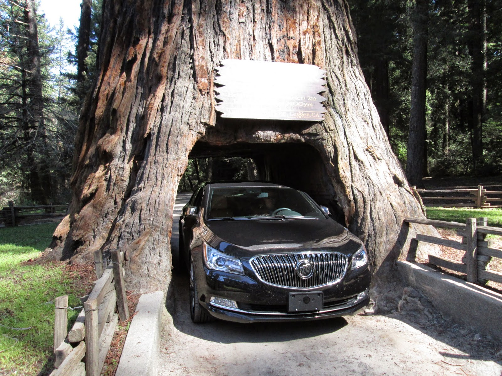 2015 Buick LaCrosse inside Chandelier Tree, Leggett, CA