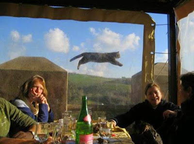 Los 19 Photobombs animales más divertidos