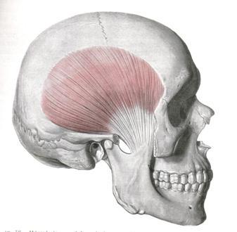Los dolores en sheynoy el departamento de la columna vertebral