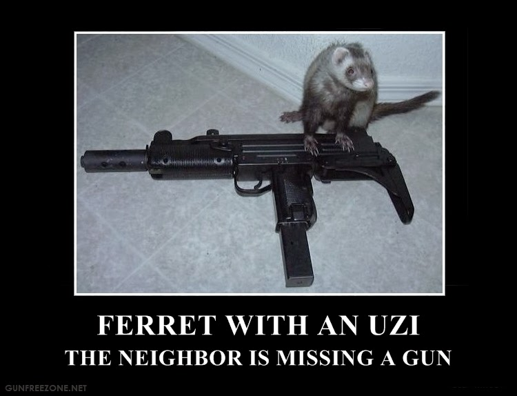 If you leave it laying around, the ferrets will drag it off.