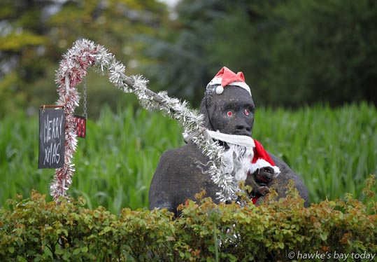 Gorilla in Maraekakaho Rd, Bridge Pa, Hastings, dressed for Christmas photograph