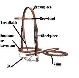 Down the Bridle Path: Basic Tack and Its Care