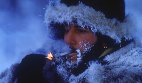 La fin des temps la r sistance au froid est dans les g nes - Camelia resistance au froid ...