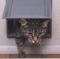 10/04/012 Ourense coloca casetas para cobijar a los gatos