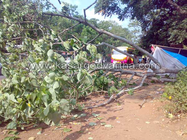 Attack, Seethangoli, Road, Vidya Nagar, Kasaragod, Kerala, Kerala News, International News, National News, Gulf News.