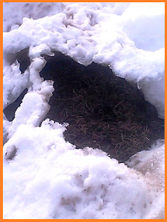 A large cavity of air created by a drainage grate caused snow to melt from below the surface, rather than from the top of a large pile of snow.