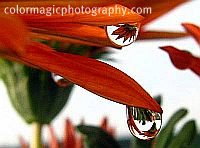 Macro flower pictures