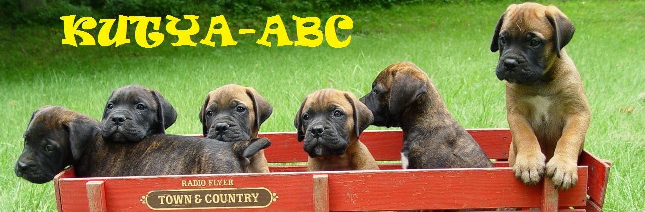 Kutya ABC