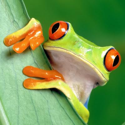 Frog Funny iPad Wallpeper