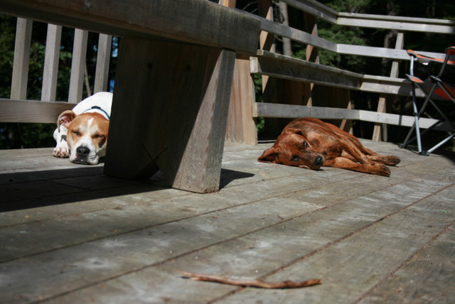 dogs sleeping on deck