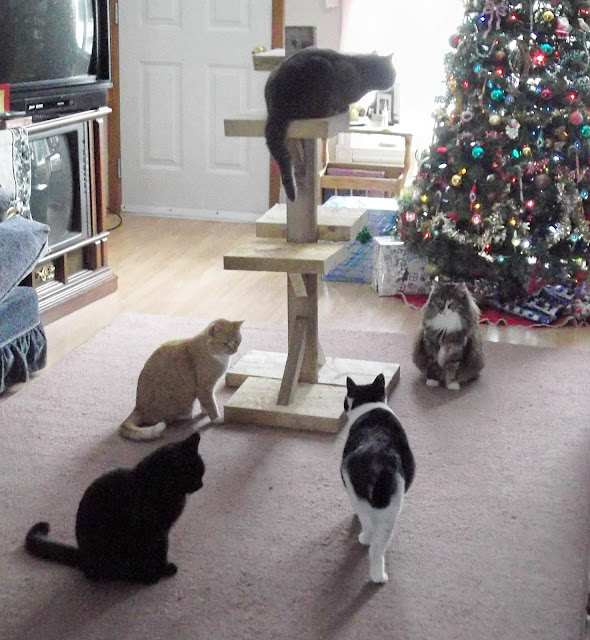 five cats round a new cat tree