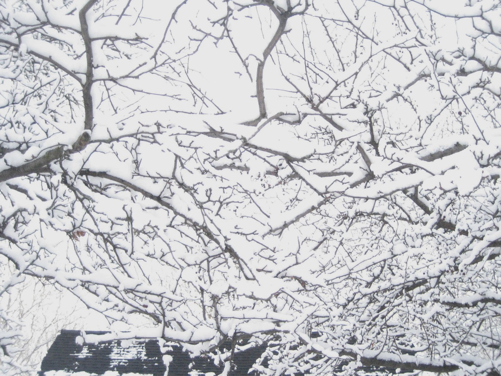in winter the branches look like lines sketches