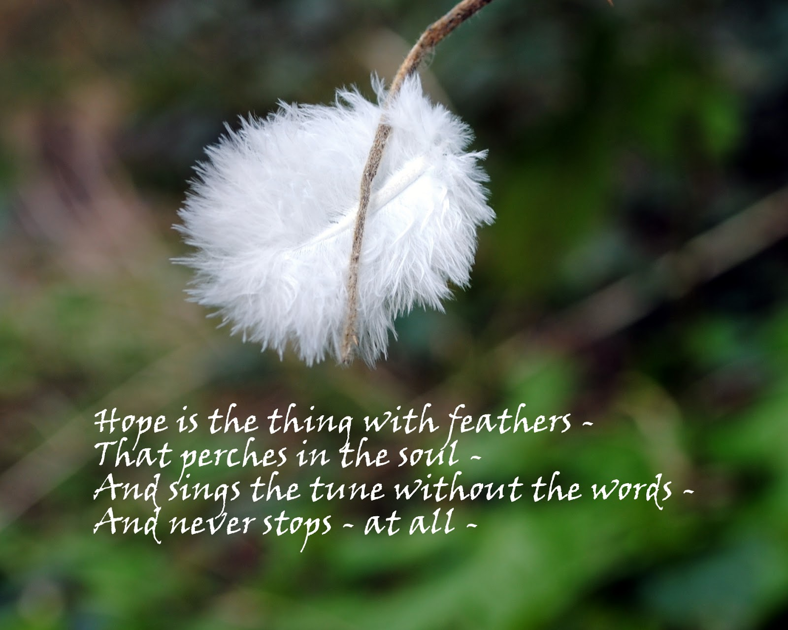 hope with the feathers In sharing this personal story, hope is the thing with feathers can help  us all approach the mystery and sorrow of great loss a powerful elegy of hope.