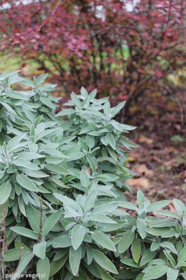 Hierbas arom ticas guia de jardin - Plantas aromaticas exterior ...