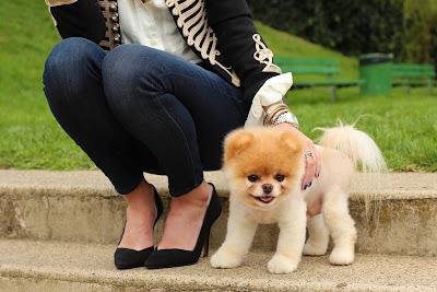 Animales Mascotas Perrito