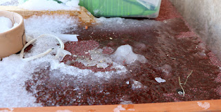 Ice on top of Sassy's hutch