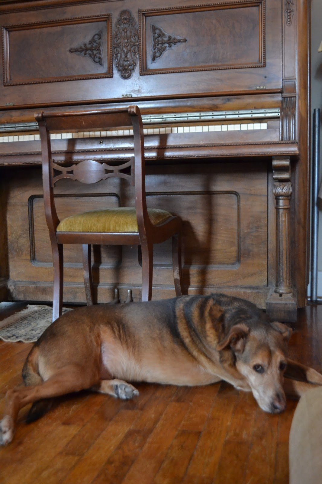 dog and antique piano