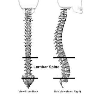 Lumbar Spine Kayak Sitting لماذا يعد الجلوس لفترات طويلة خطرا على جسم الانسان