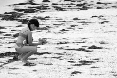 St George Island, Florida, Shells, Beach, Waves, Ocean, Summer, Fun, Vacation, Travel