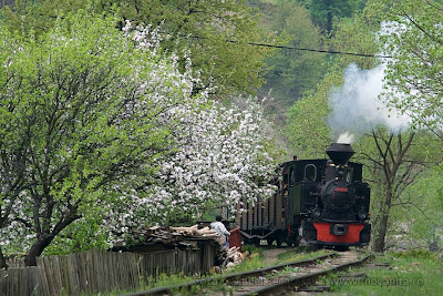 Mocanita Forestry Narrow Gauge Steam Train | www.mocanita.ro