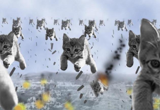 Cat Eyes Us Army