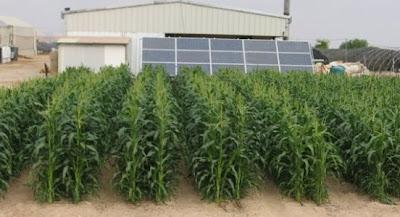 Uji coba pertanian dengan irigasi dari Sistem Desalinasi Tenaga Surya