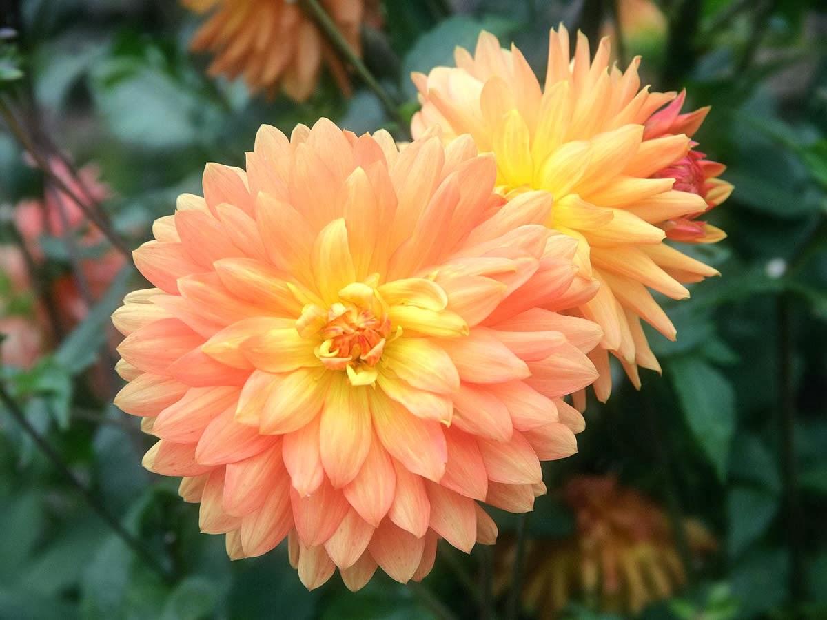 Flores de temporada oto o bliss eventos for Plantas temporada