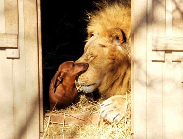 Extraña amistad entre animales de diferentes razas