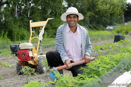 Francky Godinho, owner and chef at St Georges Restauarant, Havelock North, in one of his vegetable and edible flower gardens. photograph