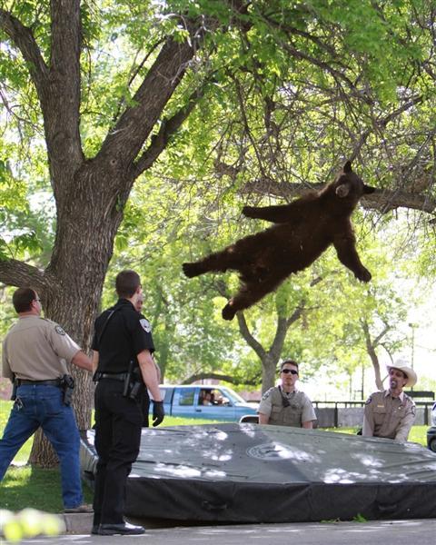 R.I.P Famous Falling Bear