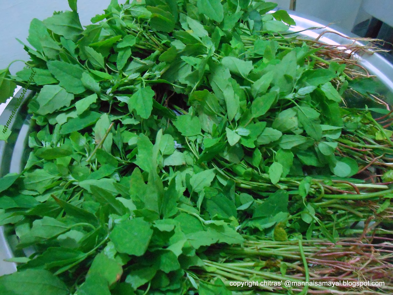 Chhattisgarh famous greens : Bathua