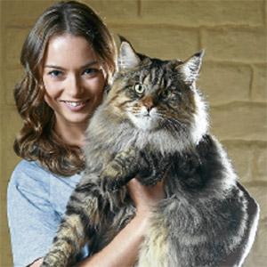 COMEL...Rupert menjuarai pertandingan kucing di Australia sebanyak tiga kali.