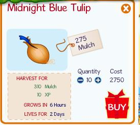 Binweevils Midnight Blue Tulip Seed