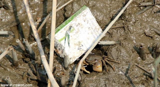 Cangrejo escondido bajo cajetilla de tabaco