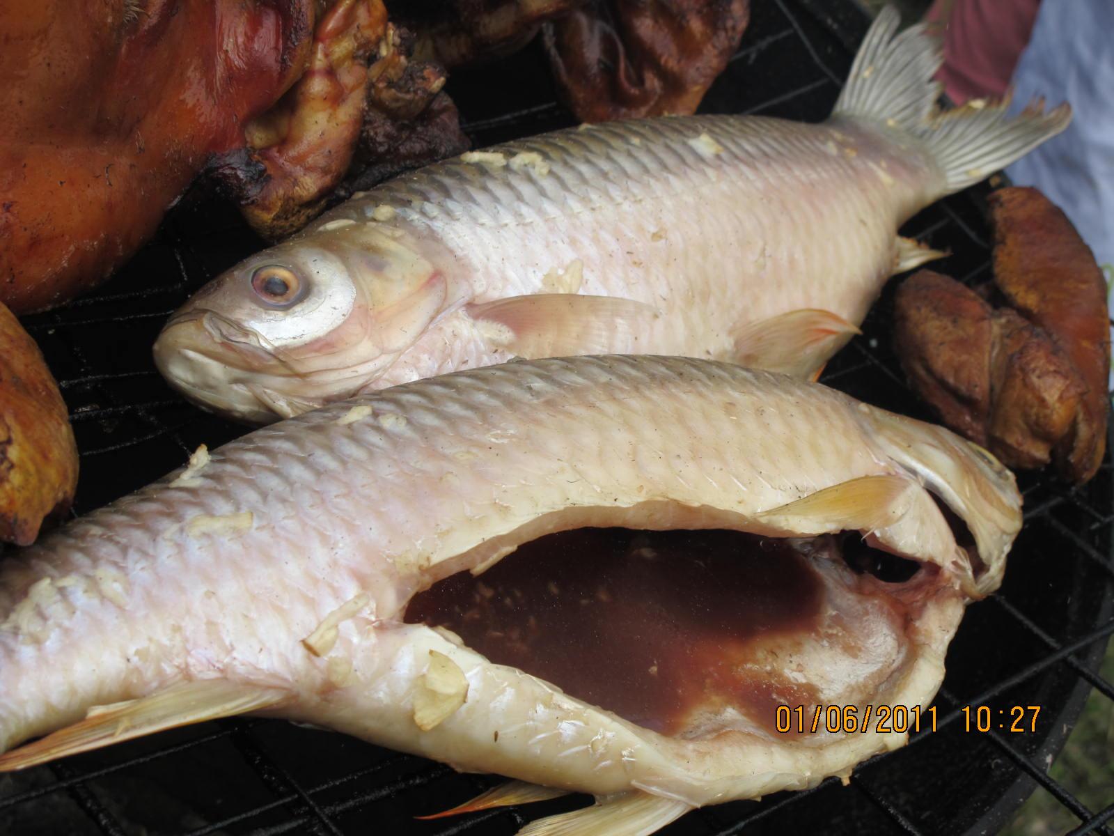 Ikan sultan