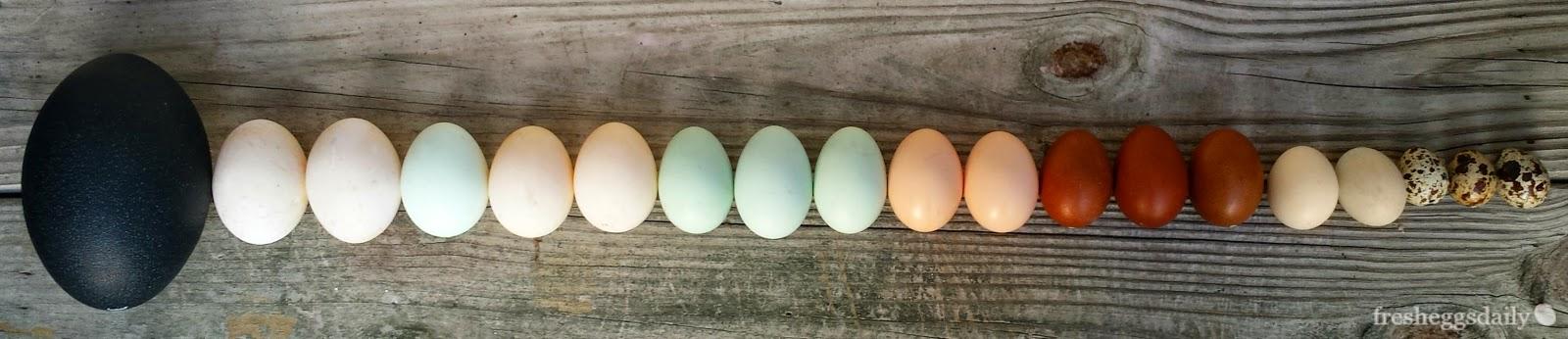 Egg as food  Wikipedia