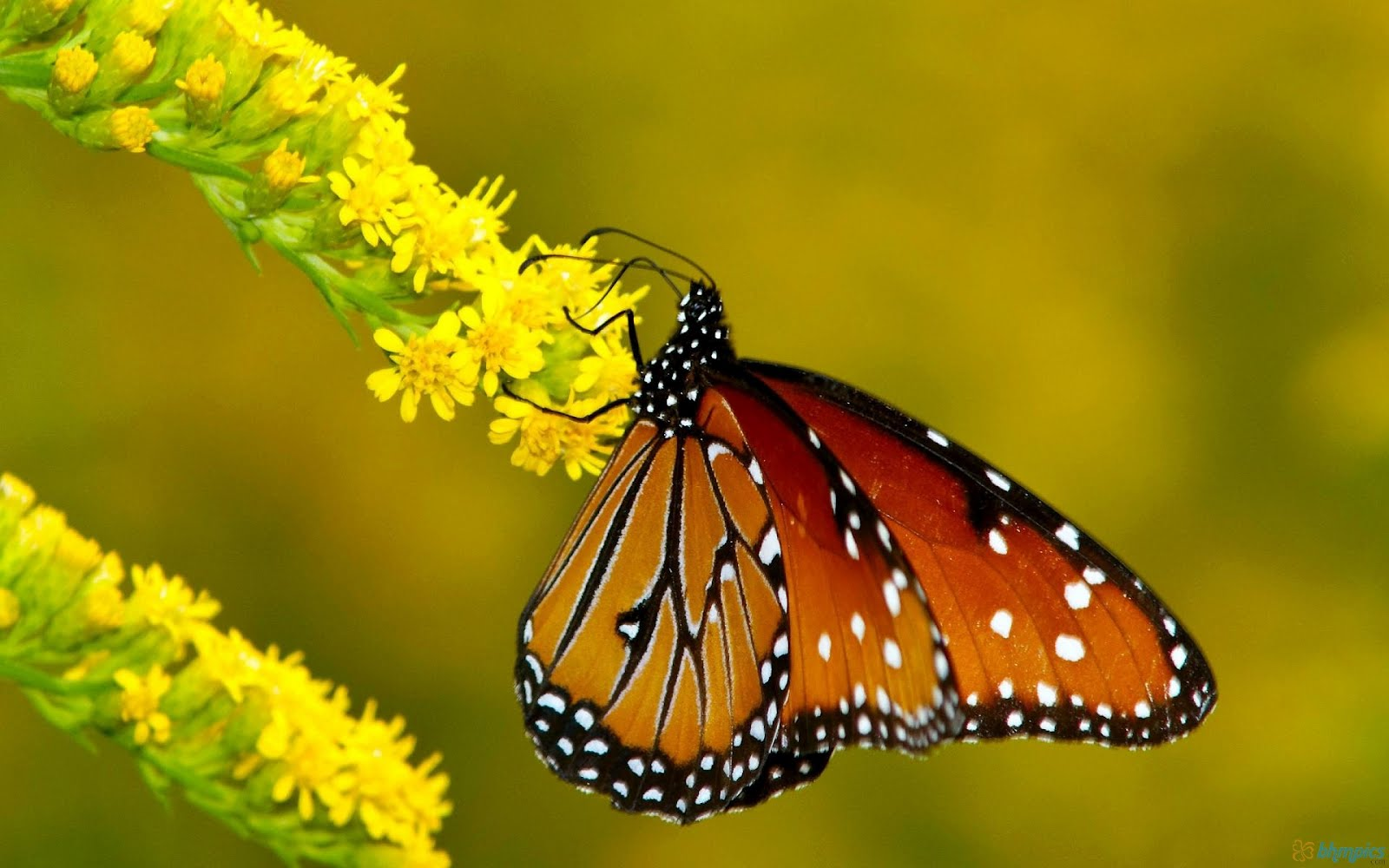 Colorful Butterfly ~ Free Wallpapers, Best Wallpapers