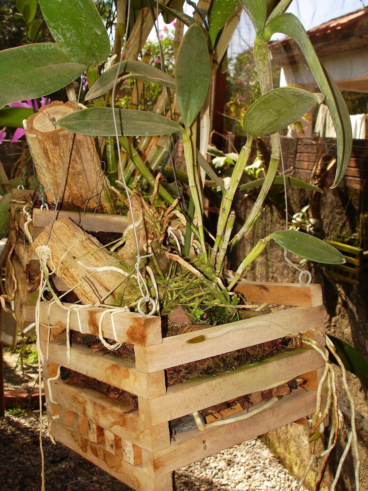Orquídeas sem mistério: Cachepot para orquídeas – Como fazer? #506310 1200x1600