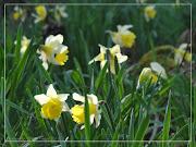 Fleurs de printemps: le point de vue de l'abeille