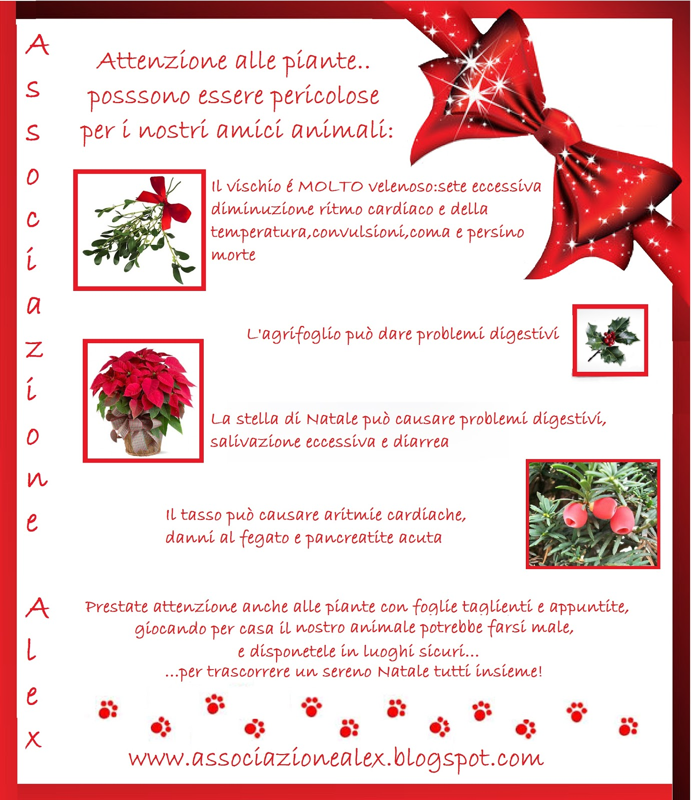 Associazione alex piante natalizie velenose per i nostri for Piante velenose per i cani