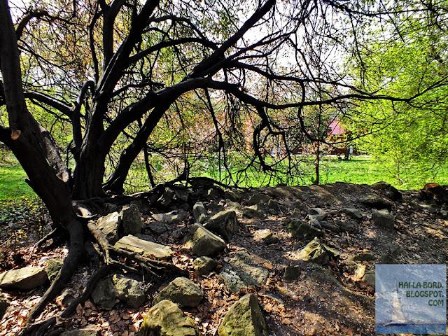 copac radacini gradina botanica bucuresti