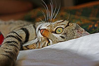 Un gatto non dormirebbe mai su un libro mediocre mondo gatto - Gatto solo in casa per 15 giorni ...